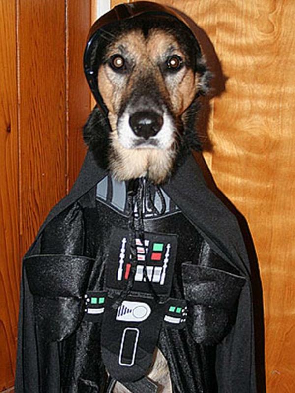 Star Wars für Hunde Darth Vader böse