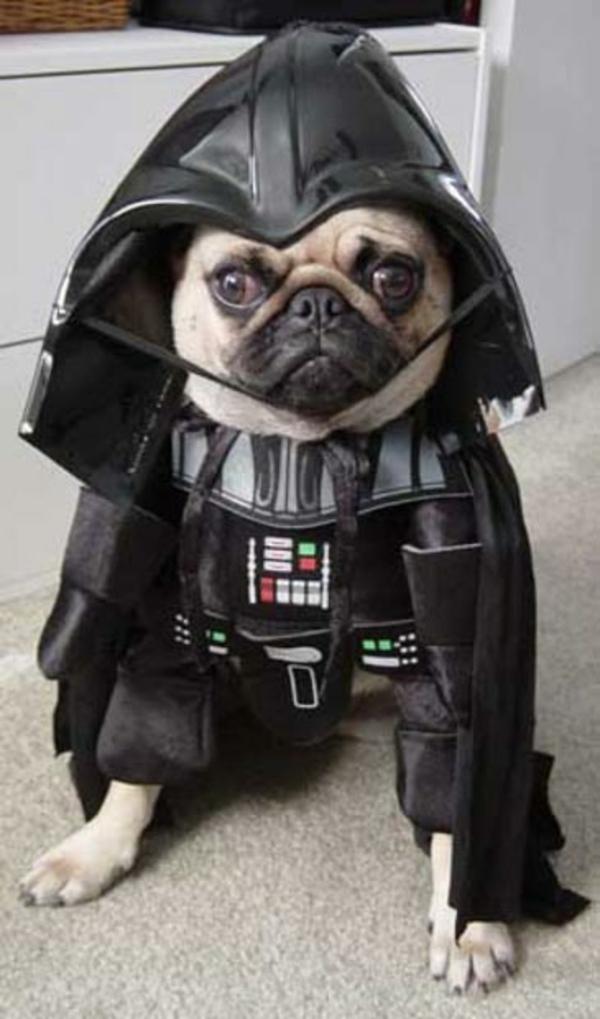 Star Wars für Hunde Darth Vader mops