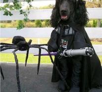 Star Wars Kostüme für Hunde – Darth Vader, Yoda, Ewok