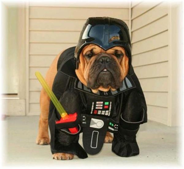 Kostüme Hunde Darth Vader tierwelt