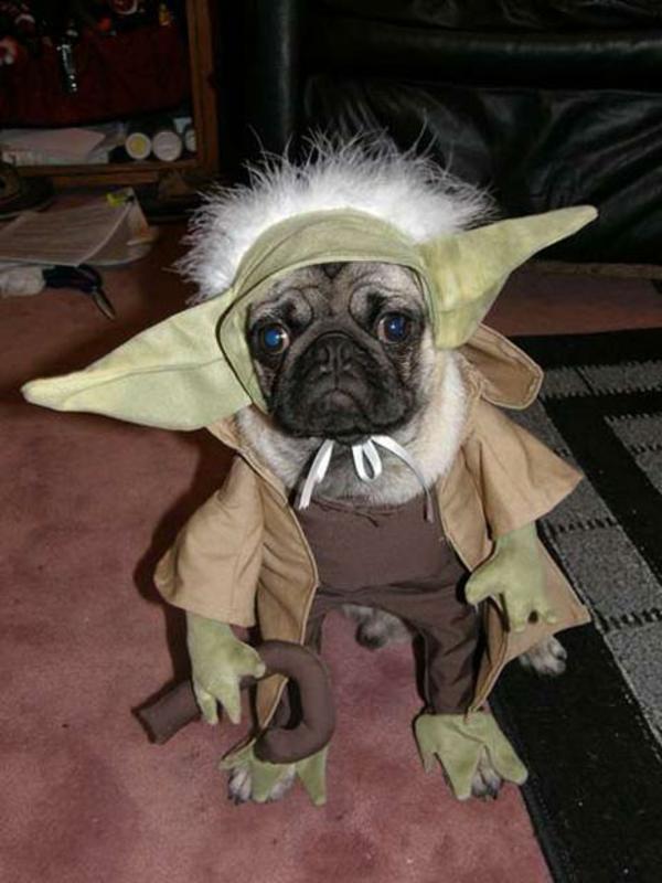 Kostüme für Hunde Yoda mops Star Wars