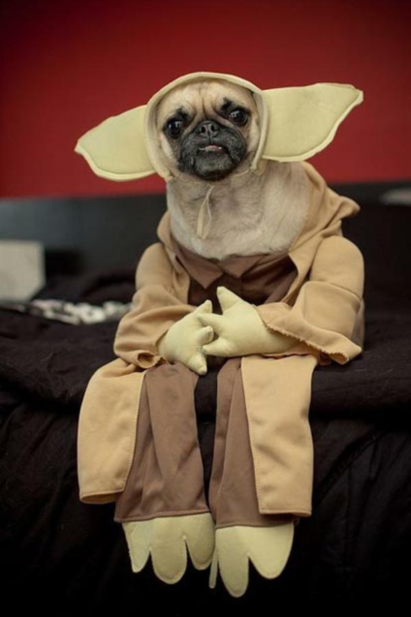 Star Wars Kostüme für Hunde - Darth Vader, Yoda, Ewok