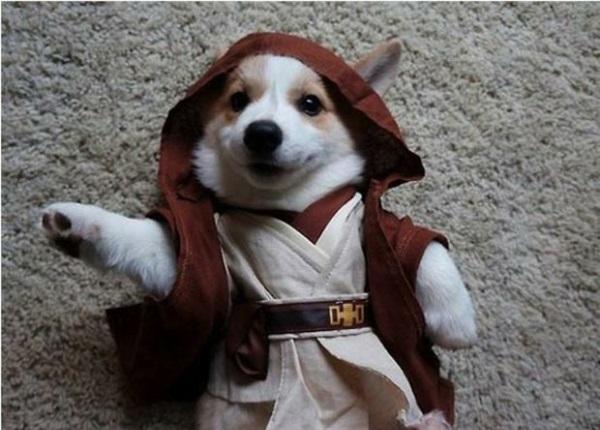 Kostüme Star Wars Hunde halloween