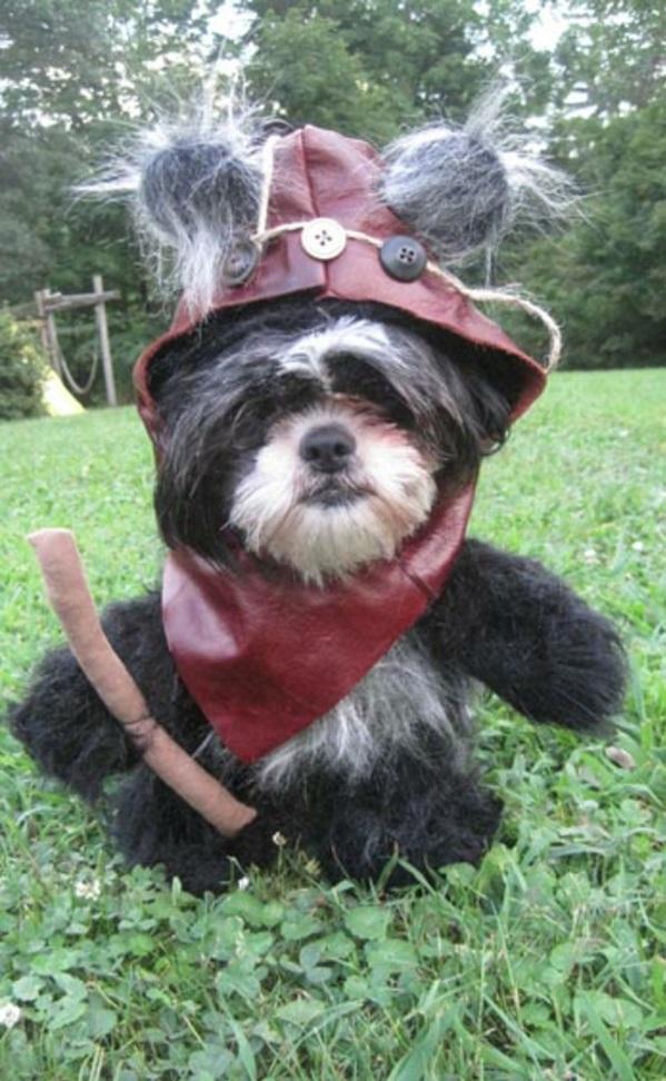 Kostüme für Hunde helden Star Wars