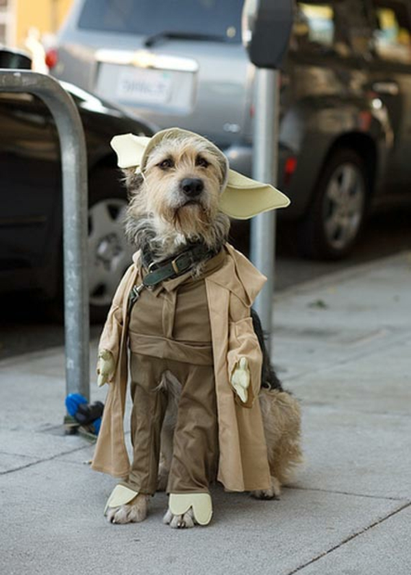 Star Wars Kostüme für Hunde originell festlich