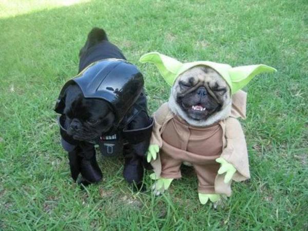 Star Wars Kostüme für Hunde süß yoda
