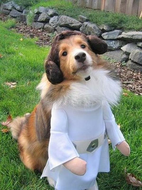 Star Wars Kostüme für Hunde schön
