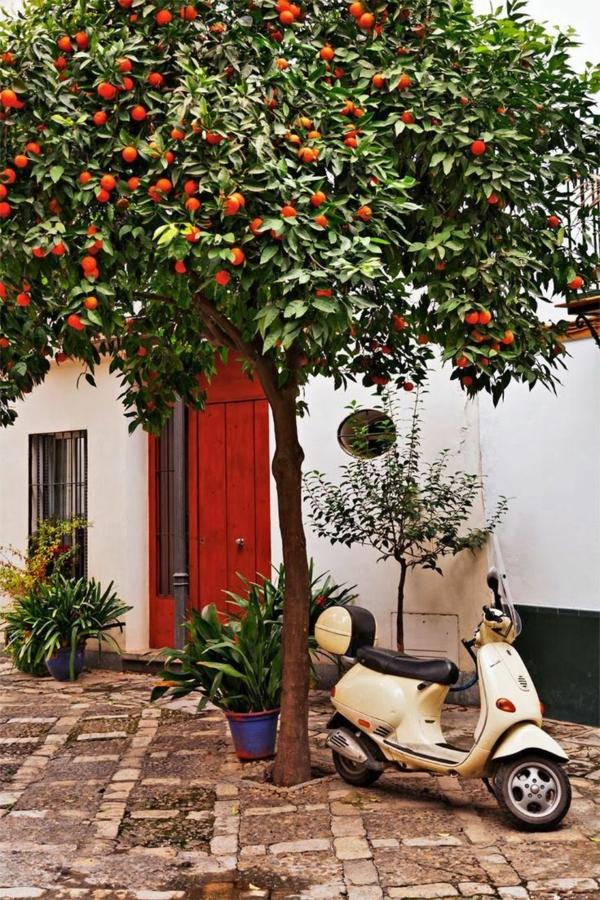 Urlaub Südspanien Sevilla straßen zitrusbäume