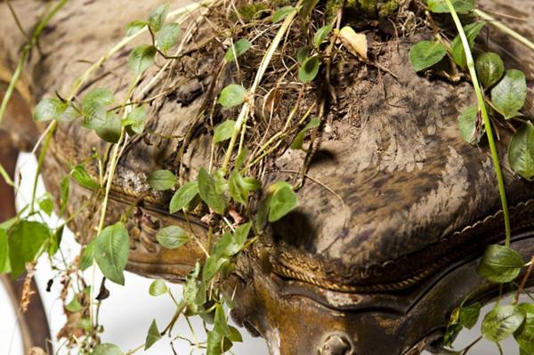 topfpflanzen pflegen bepflanzte polstermöbel toll