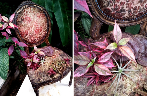 antike polstermöbel pflanzen anbauen