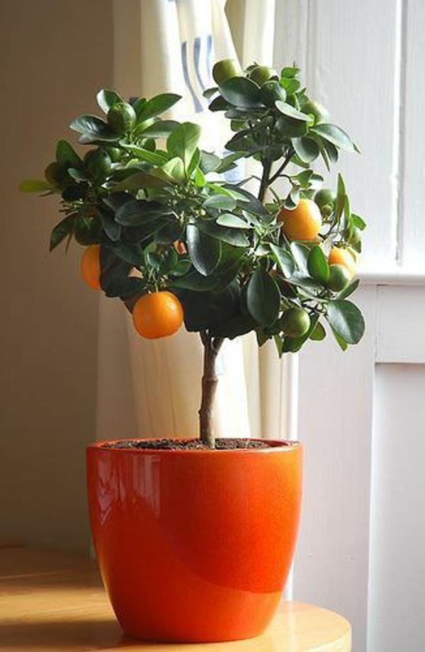 blumenkasten bepflanzen orange glanz