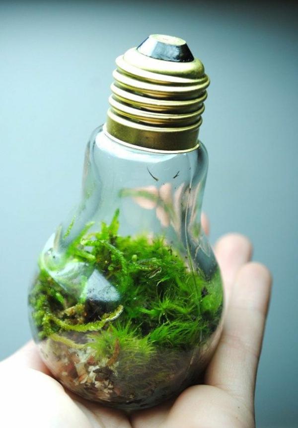 diy projekte alte glühbirnen bastelideen terrarium moos