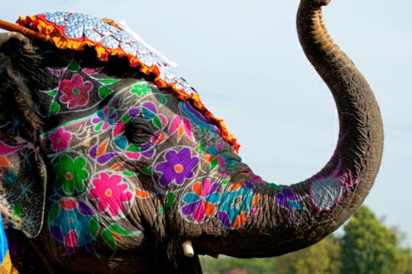 elif shafak weltliteratur elefant