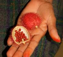 Exotische Früchte – 20 der ausgefallensten Früchte und Gemüsearten der Welt