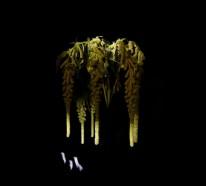 Feuerwerke aus Pflanzen von Sarah Illenberger