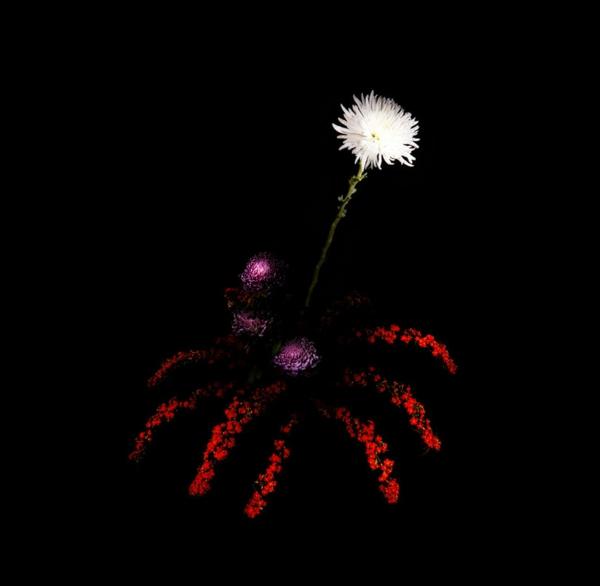 feuerwerk pflanzen blumen rote weiß