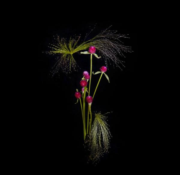 Herrliche Feuerwerke aus Pflanzen und Blumen von Sarah Illenberger