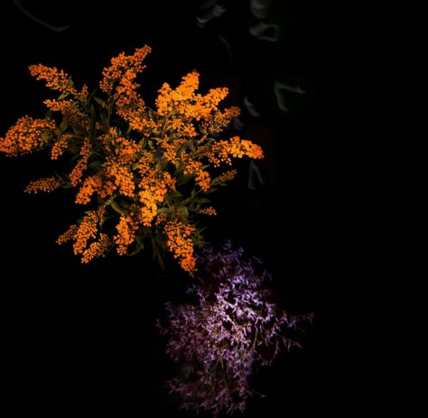 feuerwerke pflanzen orange lila
