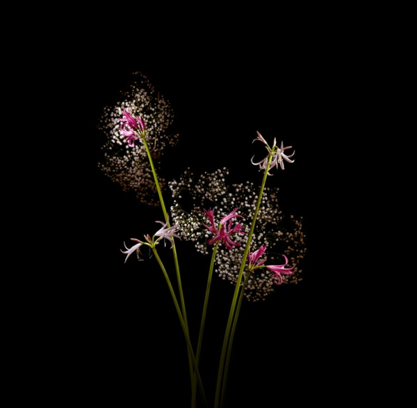 feuerwerke pflanzen zarte blumen