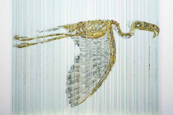 glas kunst berknöcherter vogel glas
