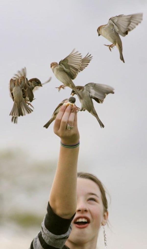 momente des glücks alltag vogel füttern