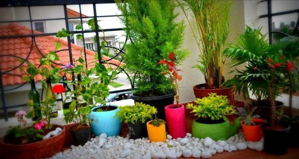 pflanzen balkon terrasse bunt blumentöpfe knall