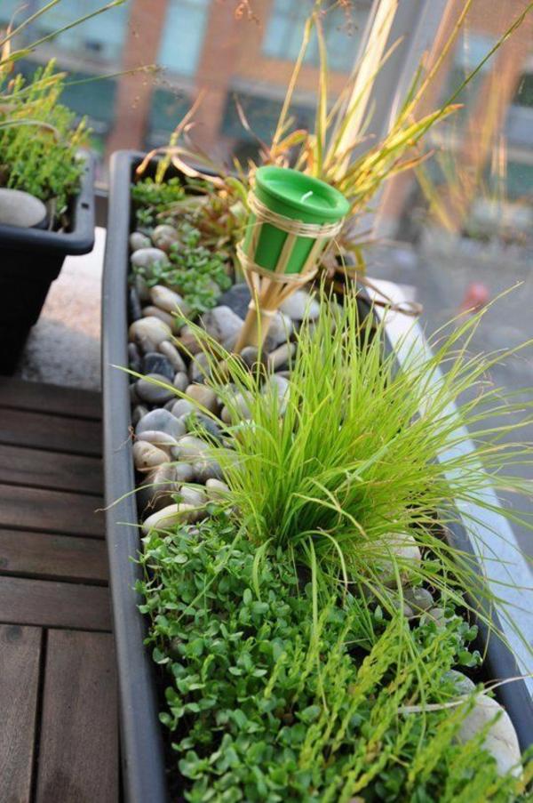 pflegeleichte Balkonpflanzen grün gras