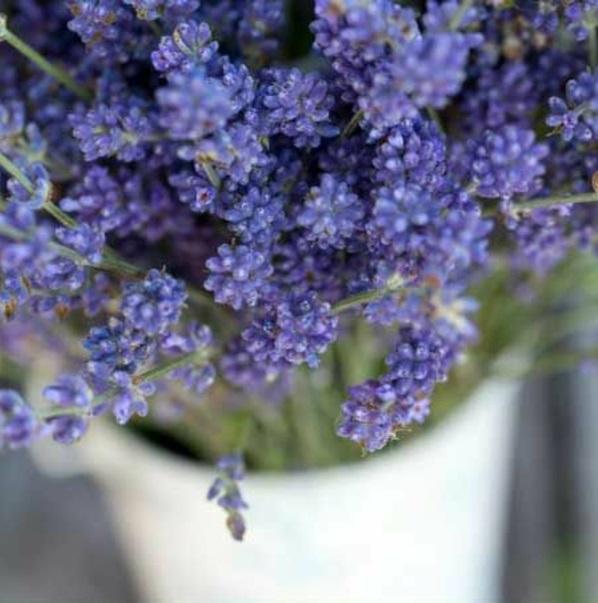 pflegeleichte Balkonpflanzen lila blüten