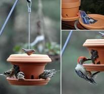 Futterhäuschen für Vögel selbst bauen