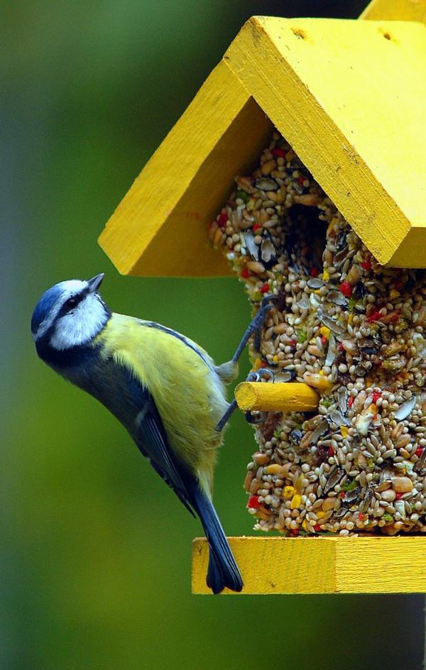 Futterhäuschen für Vögel bauen selbst basteln