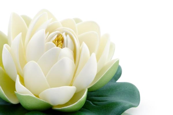 yoga entspannung lotos
