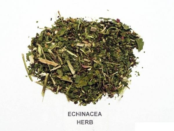 Gewürz Heilpflanzen kräutergarten sonnenhut pflanze echinacea