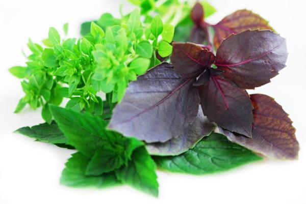 Gewürz und Heilpflanze kräutergarten gestalten heilende pflanzen