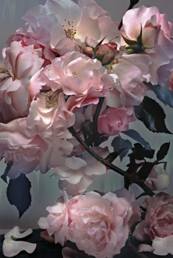 Romantische Geschenke für sie wohlduftend rosen
