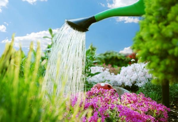 Wasser sparen Tipps nachhaltiges leben gartenarbeit blumen gießen