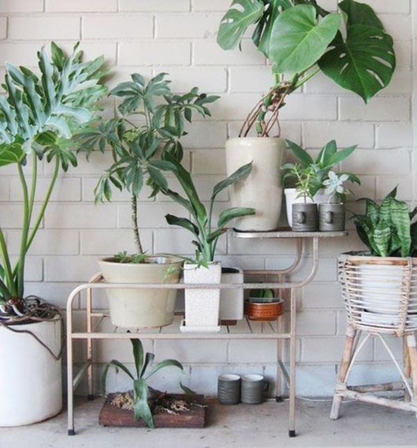 Zimmerpflanze schattig Geranie zimmergrünpflanzen pflegeleicht