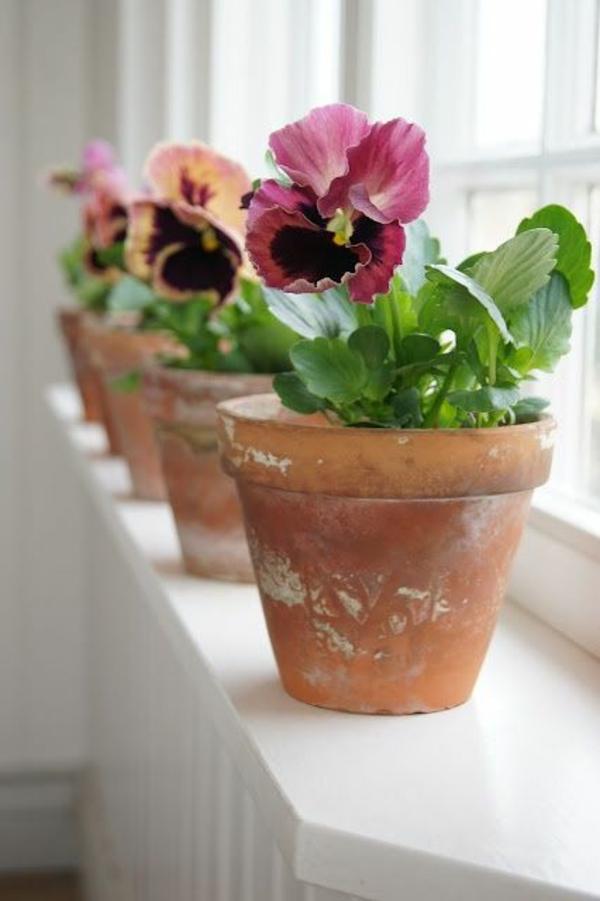 Zimmerpflanze schattig Springkräuter Impatiens blühende zimmerpflanzen