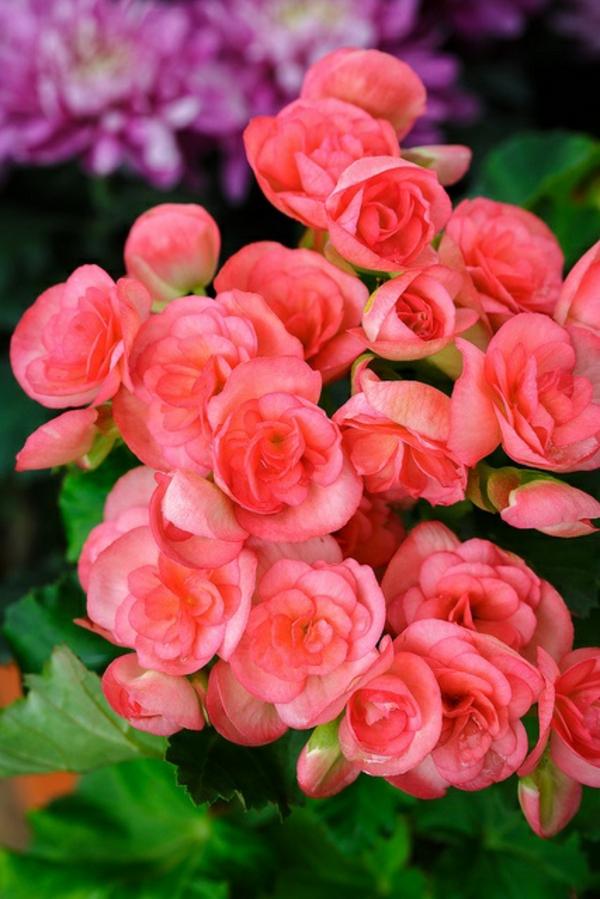 Blühende Zimmerpflanzen diese zimmerpflanzen sind schattig und pflegeleicht