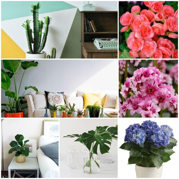 Zimmerpflanze schattig blühende zimmerpflanzen wenig licht