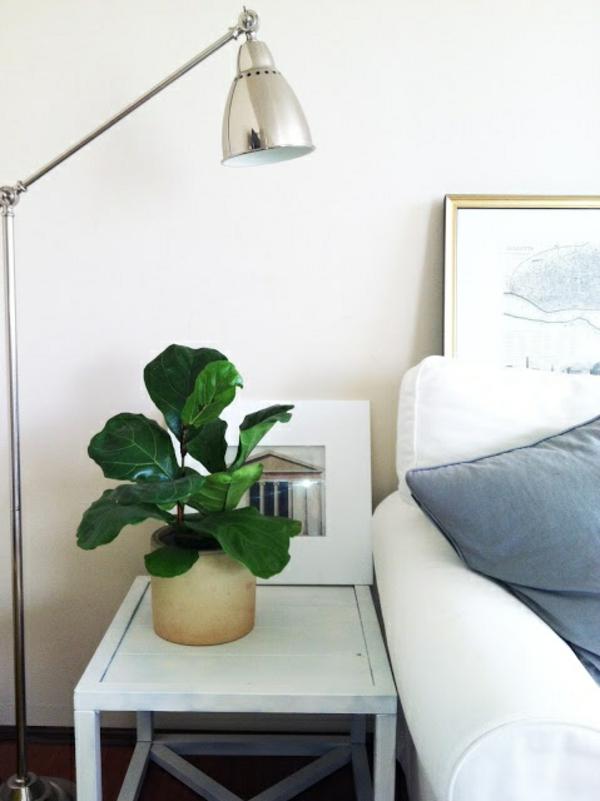 Zimmerpflanze schattig feigenbaum zimmergrünpflanzen pflegeleicht