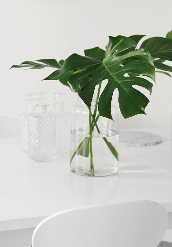 Zimmerpflanze schattig monstera zimmergrünpflanzen pflegeleicht