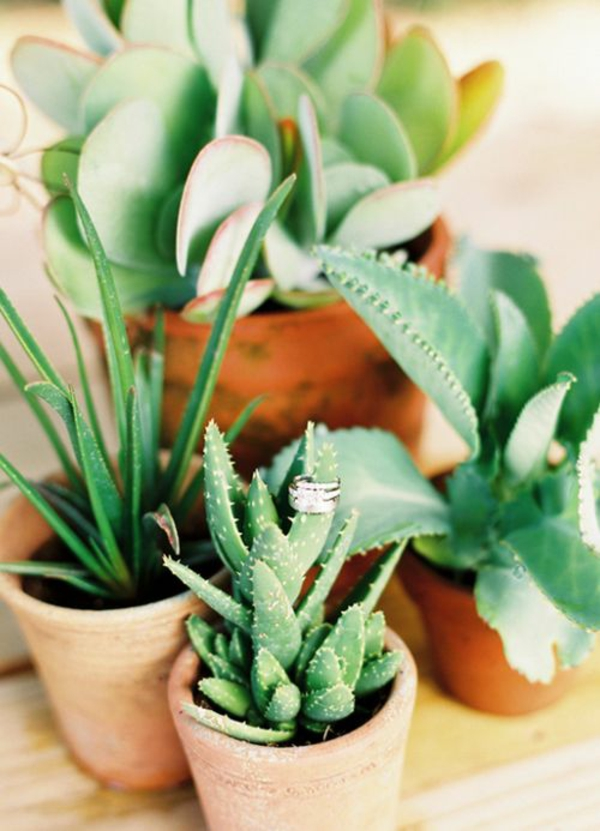 Zimmerpflanzen Schattig diese zimmerpflanzen sind schattig und pflegeleicht