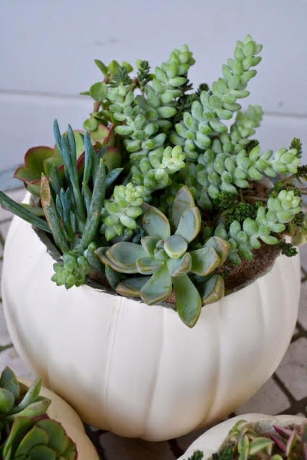 diese zimmerpflanzen sind schattig und pflegeleicht coole deko ideen f r das interieur. Black Bedroom Furniture Sets. Home Design Ideas