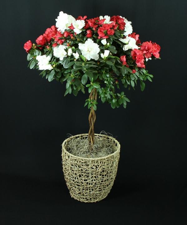 azalee deko ideen valentinstag geschenk idee