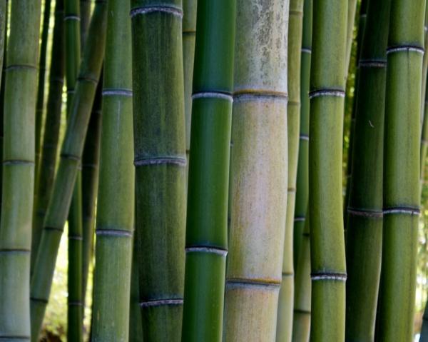 bambus deko bambusstämme baumaterial pflanze