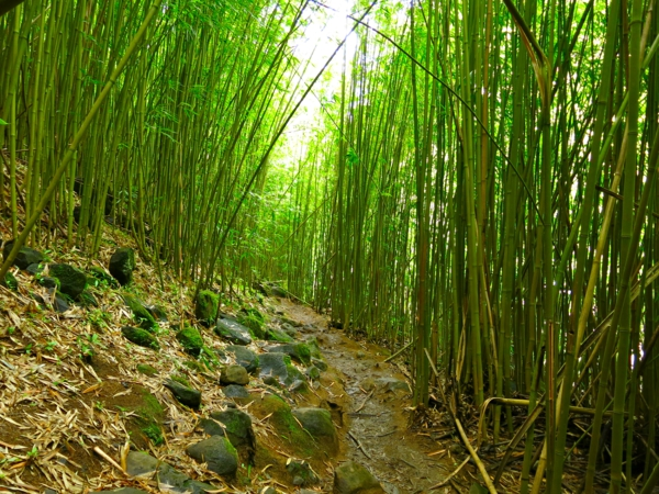 bambus deko bambuswald pfad