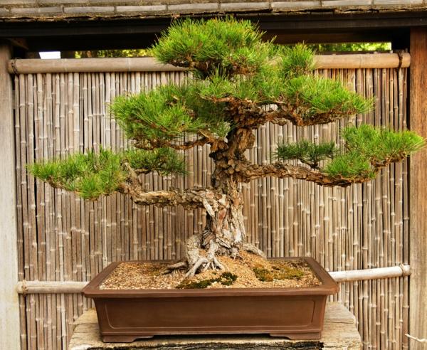bambus deko gartenzaun bonsai