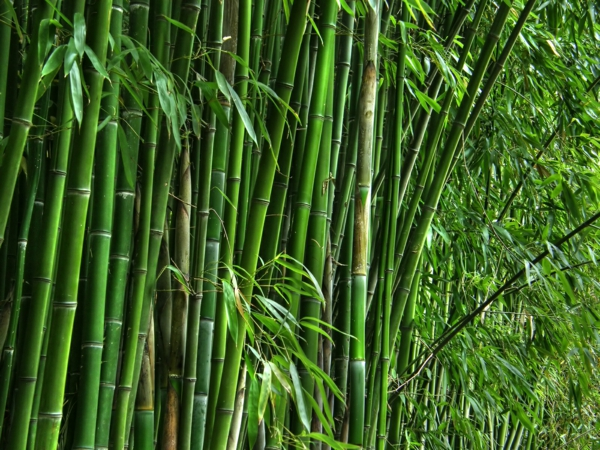 bambus deko. Black Bedroom Furniture Sets. Home Design Ideas