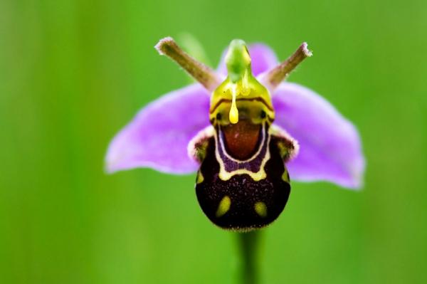 Orchideenarten die sie erstaunen inspirieren wortlos - Wandfarben arten ...