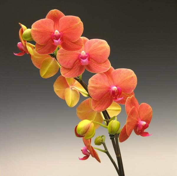 blumen bedeutung orchidee garten pflanzen